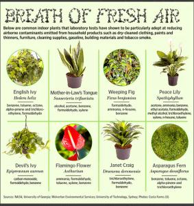 Plants-that-clean-the-air - 02