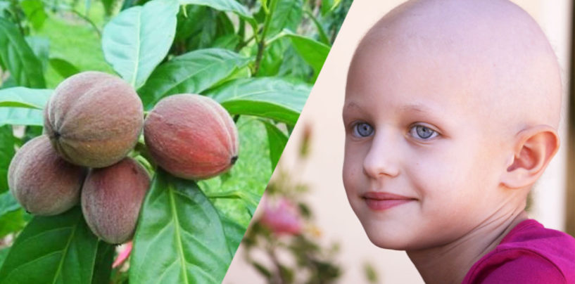 Exciting Breakthrough!! Australian Fruit Extract Has Been Found To Fight & Destroy Cancer In 48 Hours! (Video)